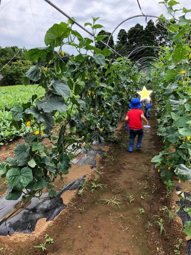 野菜収穫をする男の子